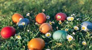 Closeup of Easter Eggs in Grass at