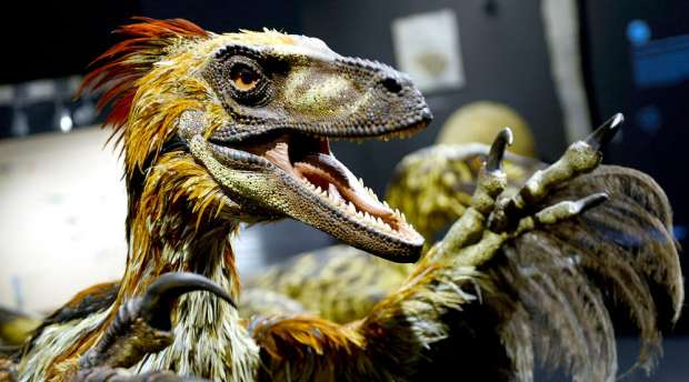 epa04416451 A new model of a carnivorous Deinonychus with feathers is on display in the exhibition ...